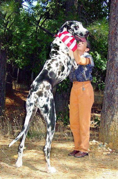 biggest animal in world. WORLD#39;S LARGEST ANiMALS.
