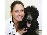 Deidre Chiaramonte has all the advice you need if your dog needs to have surgery.
