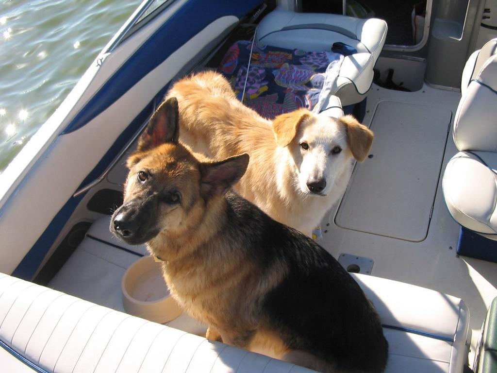 Boat Dogs Breed Boat Dogs