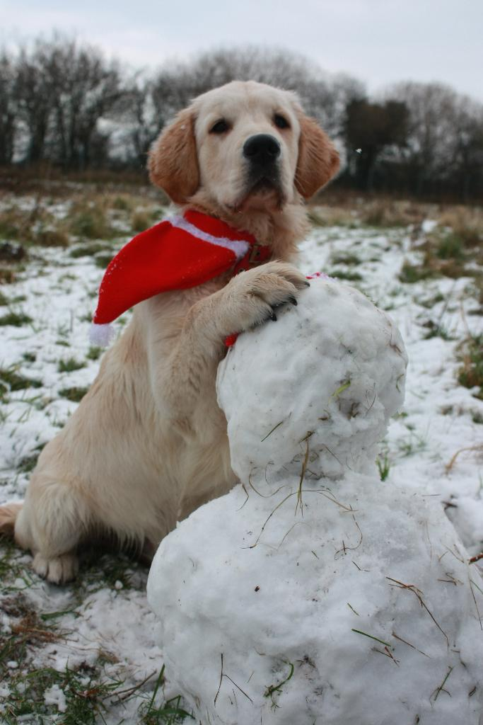 Oh doggy it 39 s cold outside advice from dogs trust roden dogcast radio - Keeping outdoor dog happy winter ...