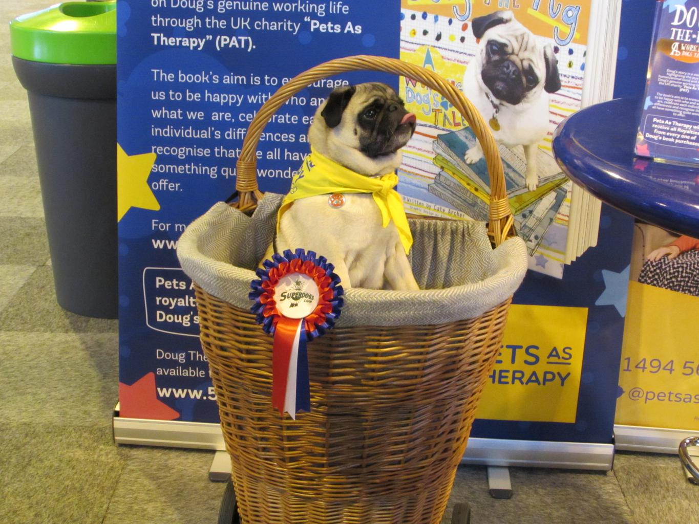 Doug the Pug Therapy Dog took Crufts in his relaxed stride. Tags: Doug the Pug Pug Therapy Dog