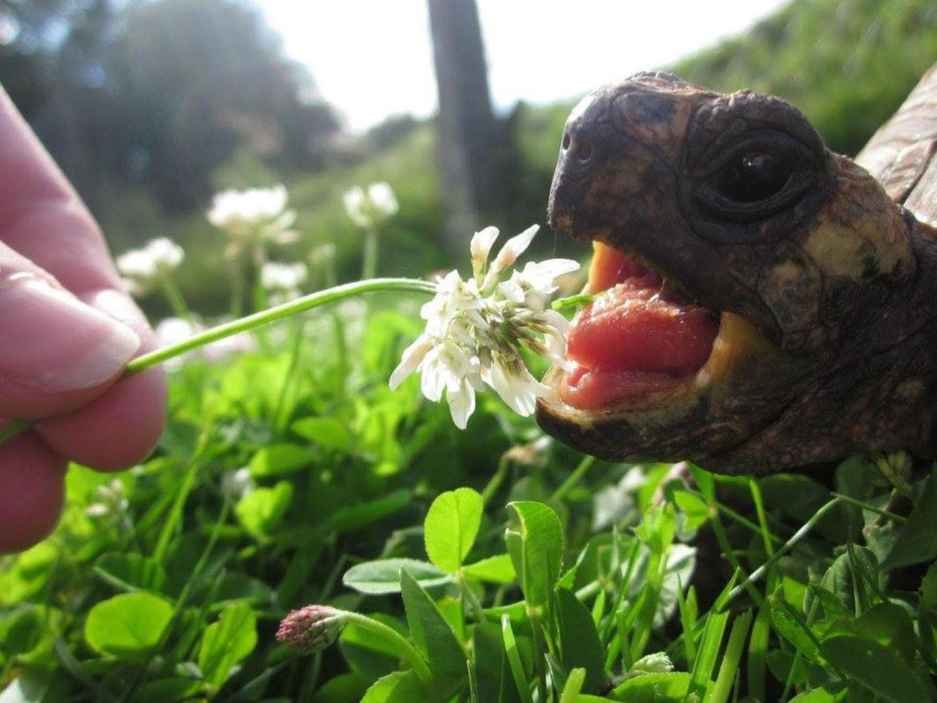 A tortoise about to munch on some lunch, spaniels playing at the seaside and a kitten paw-ing at dust are just some of the images that are in the running for the RSPCA's People's Choice award this year. Tags: People's Choice Award RSPCA tortoise