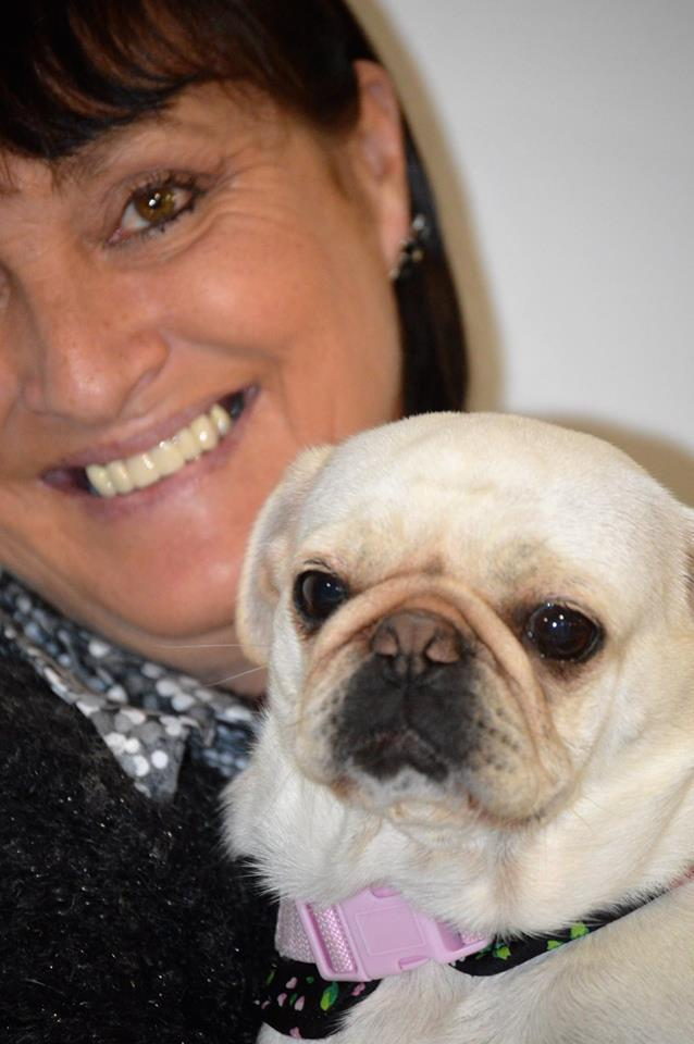 Susannah Chalmers is proving that Pugs can do anything any other breed can do. Tags: active dogs agility dog Pug Pug agility Pugability