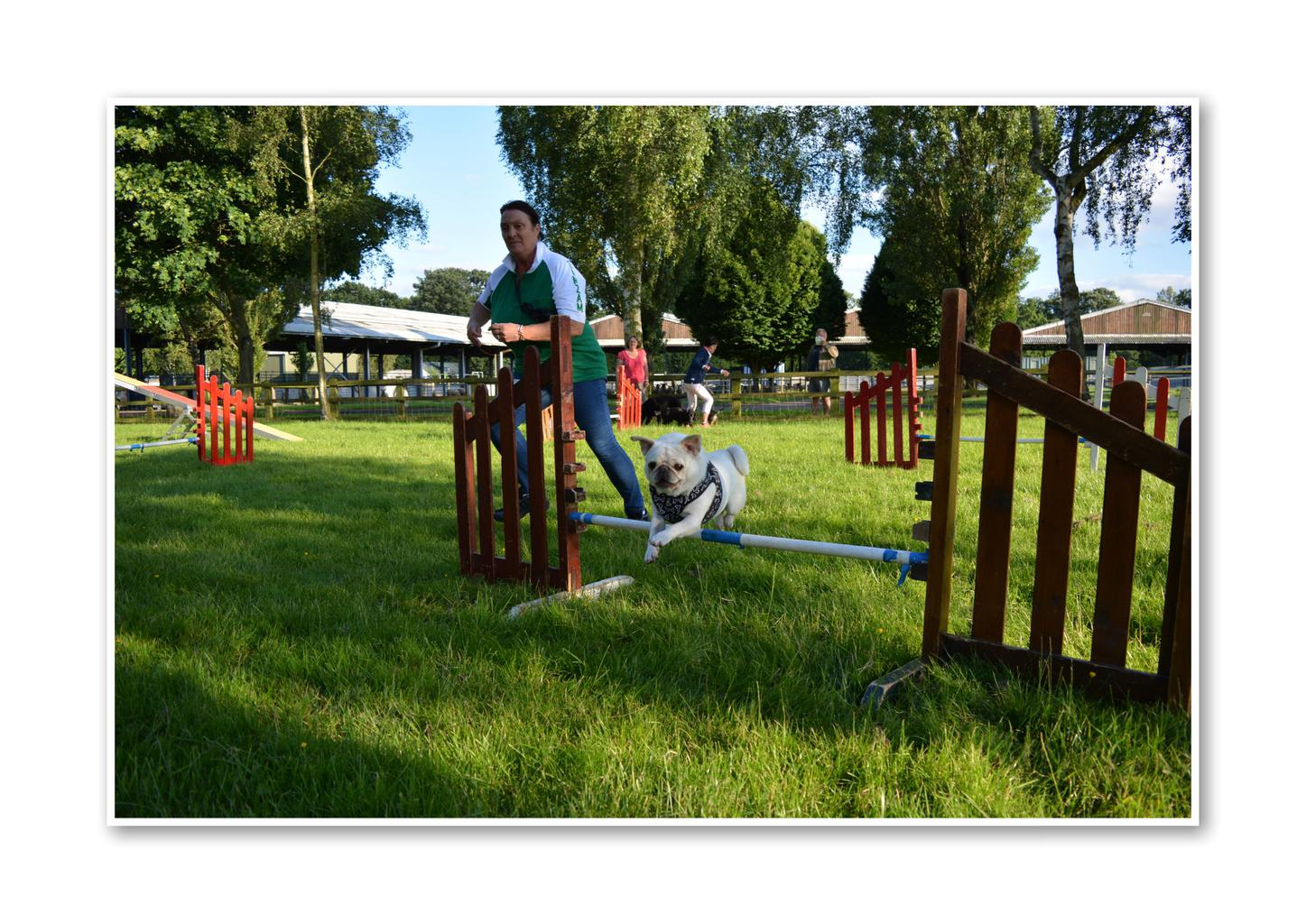 Susannah Chalmers and her rescue Pug Marsha in action. Tags: active dog agility dog fit dog healthy dog Pug