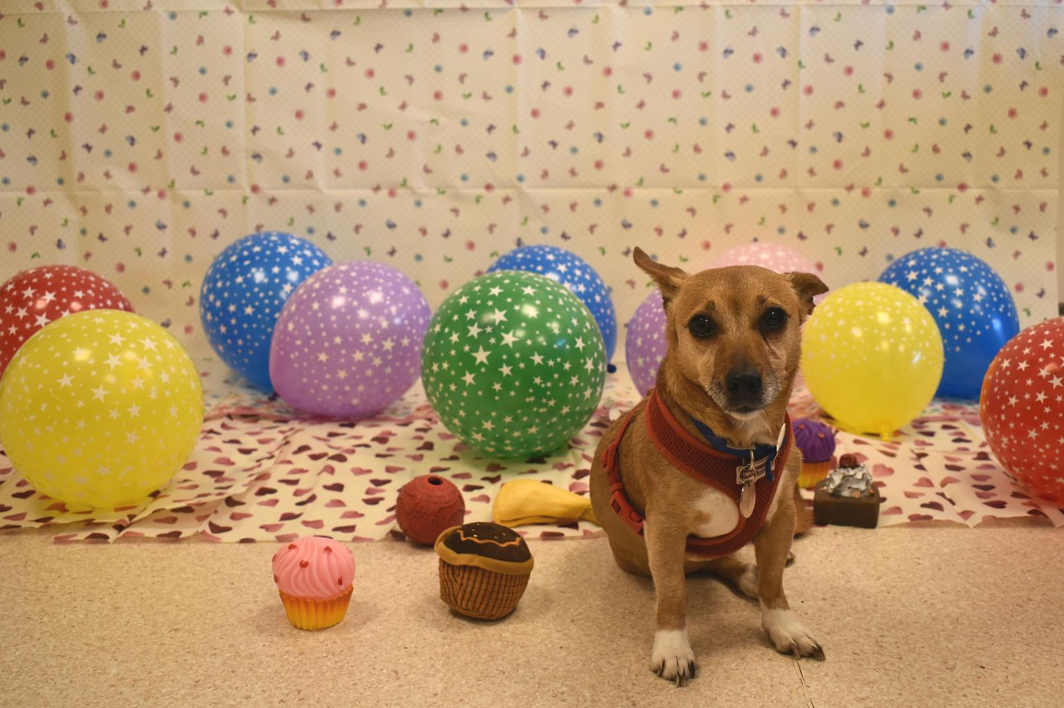Honey's two year anniversary party. Tags: Battersea Dogs & Cats Home rescue dog