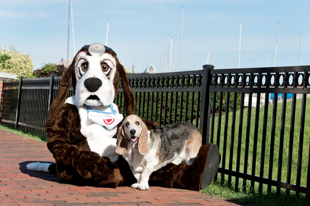 The Buddy Foundation of Maryland offers emotional and financial support to dog owners whose dogs are in need of surgical care and the family cannot fund that, meaning the only alternative is euthanasia. This photo is of the founder's dog, Buddy himself. Hear about them in episode 182 of DogCast Radio. Tags: Basset Hound canine surgery charity dog emotionl support financial support