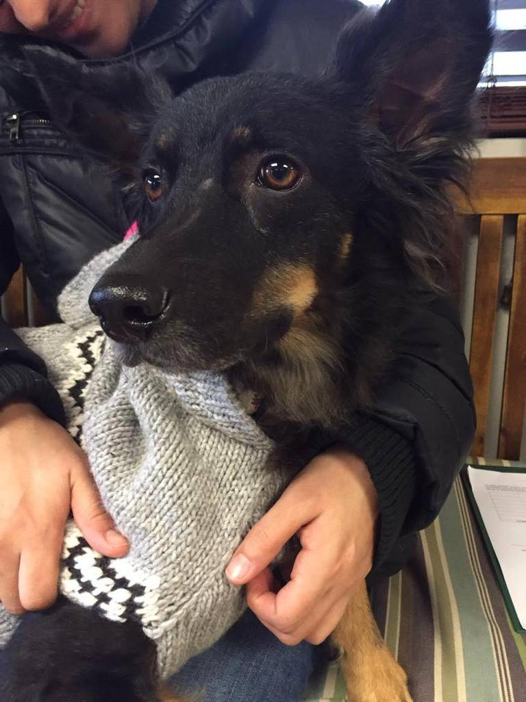 The Buddy Foundation of Maryland offers emotional and financial support to dog owners whose dogs are in need of surgical care. Lucho is one of the dogs they have helped. Tags: Buddy Foundation of Maryland