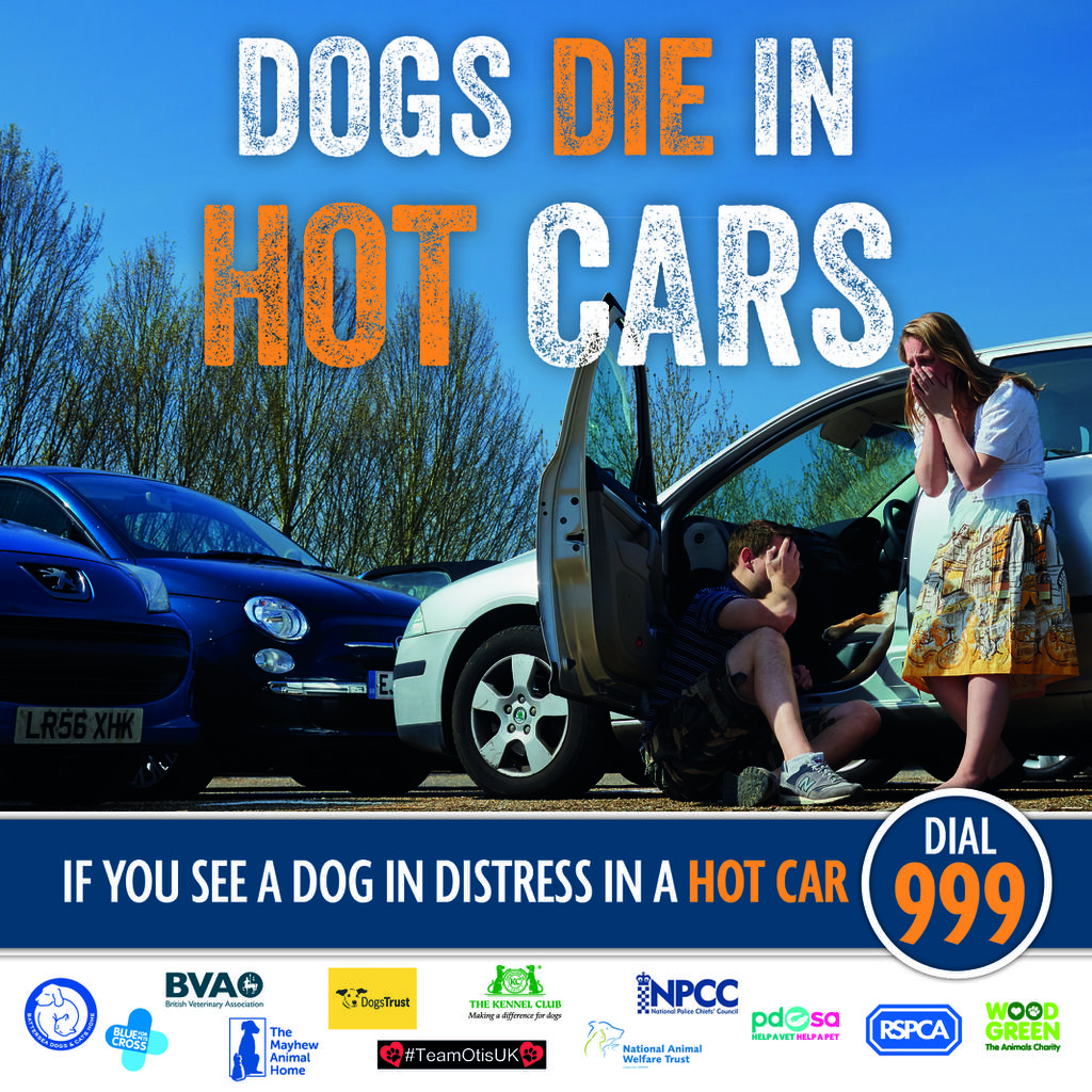 Don't leave your dog in a hot car - and don't let someone else do it either. Tags: dog dogs die in hot cars summer
