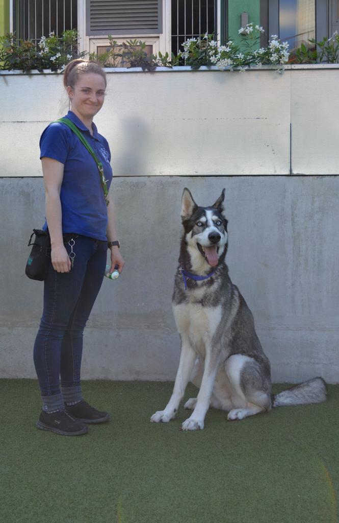 Loki is a Northern Inuit cross in Battersea Dogs & Cats Home's care. Tags: Battersea Dogs & Cats Home Northern Inuit