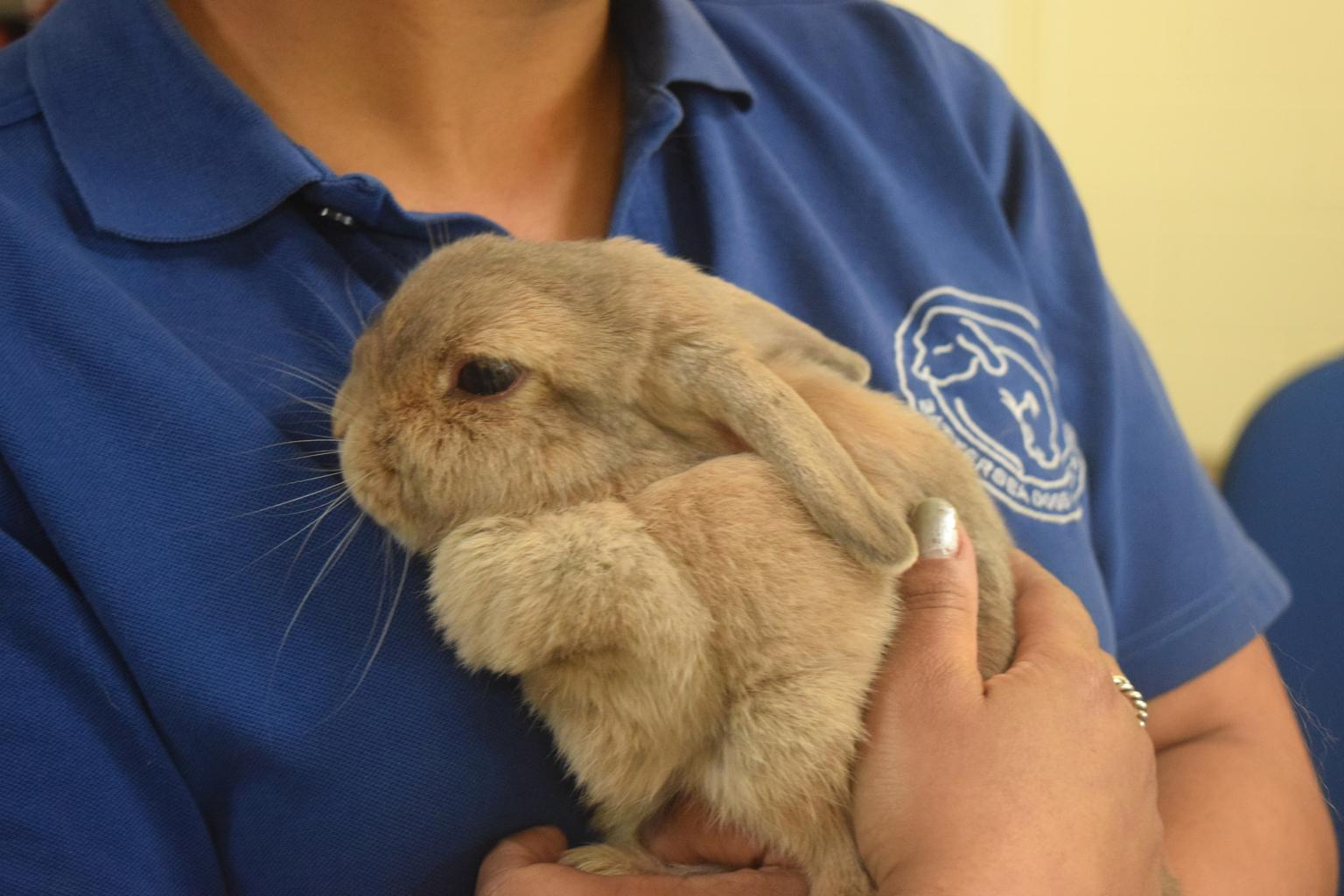 Pearl the rabbit was reunited with her owner by Battersea. Tags: Battersea Dogs & Cats Home cat charity dog rabbit