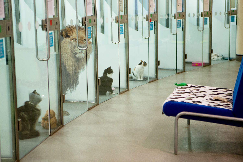Battersea's April Fool joke. Tags: April's Fool Battersea Dogs & Cats Home cat dog joke lion