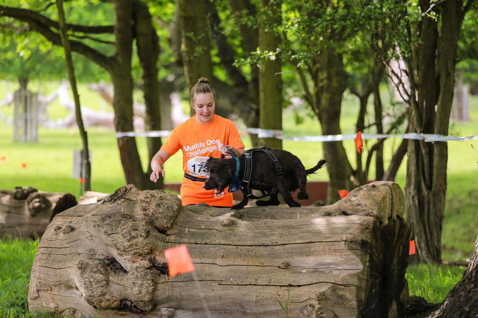 Runner and dog take on the log obstacle. Tags: Battersea Dogs & Cats Home Muddy Dog Challenge