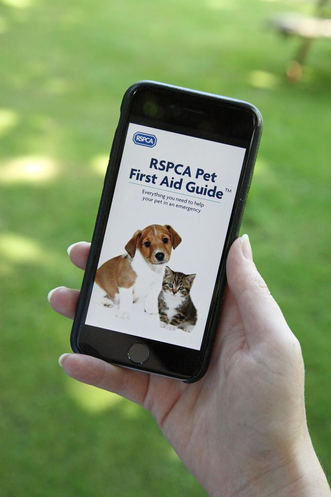 Do you know how to carry out CPR on your cat, what to do if your dog is choking or how to help a pet in shock? The RSPCA's brand new free downloadable Pet First Aid Guide has everything owners need to know in an emergency. Tags: first aid RSPCA