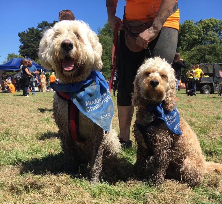 On Saturday 10th June, hundreds of Essex residents and their four-legged companions took on one of the biggest canine events of the year – Battersea's Muddy Dog Challenge, supported by LV=. Tags: Battersea Dogs & Cats Home charity Essex Muddy Dog Challenge