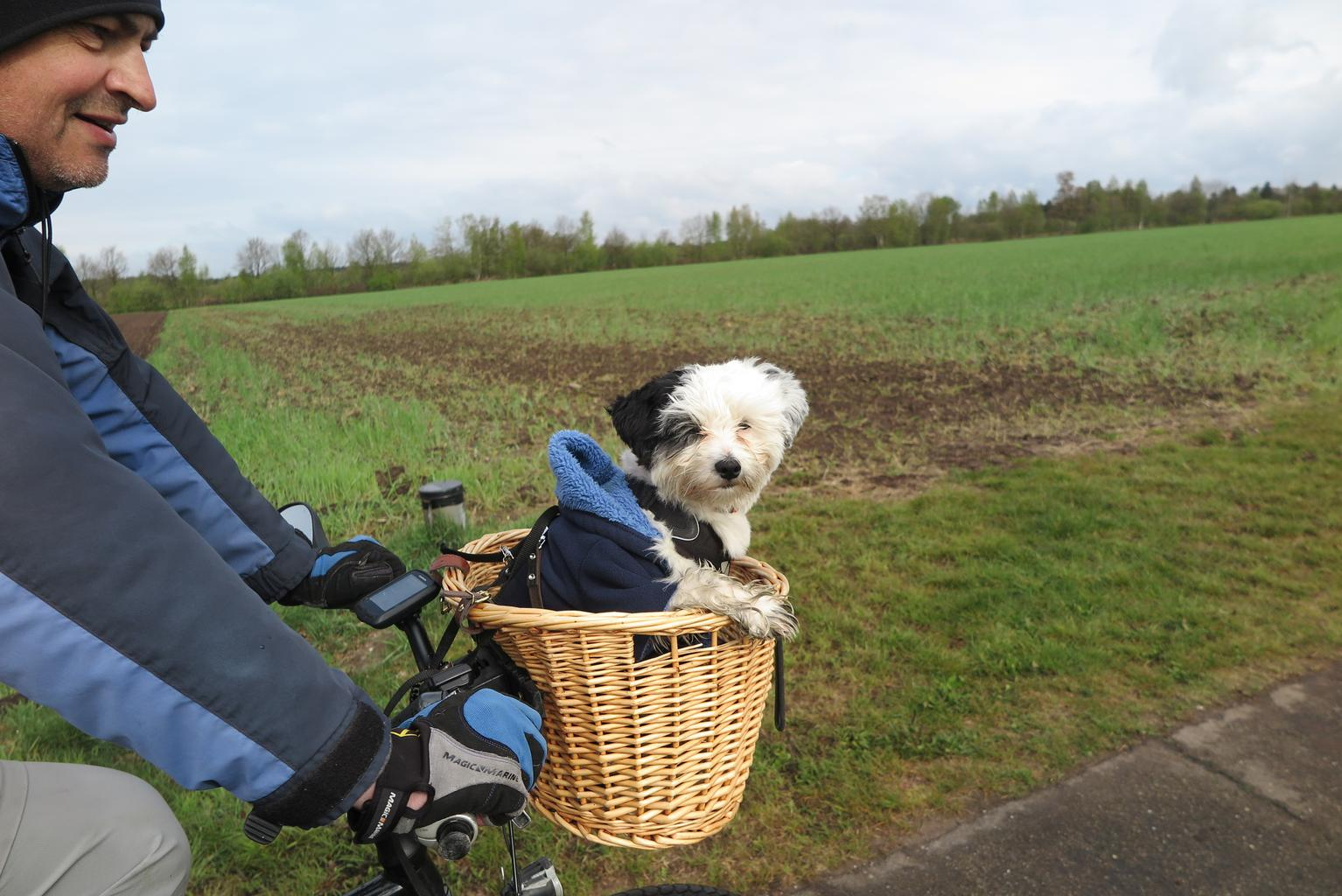 Rocky enjoying a biking trip with John. Tags: bike cute dog