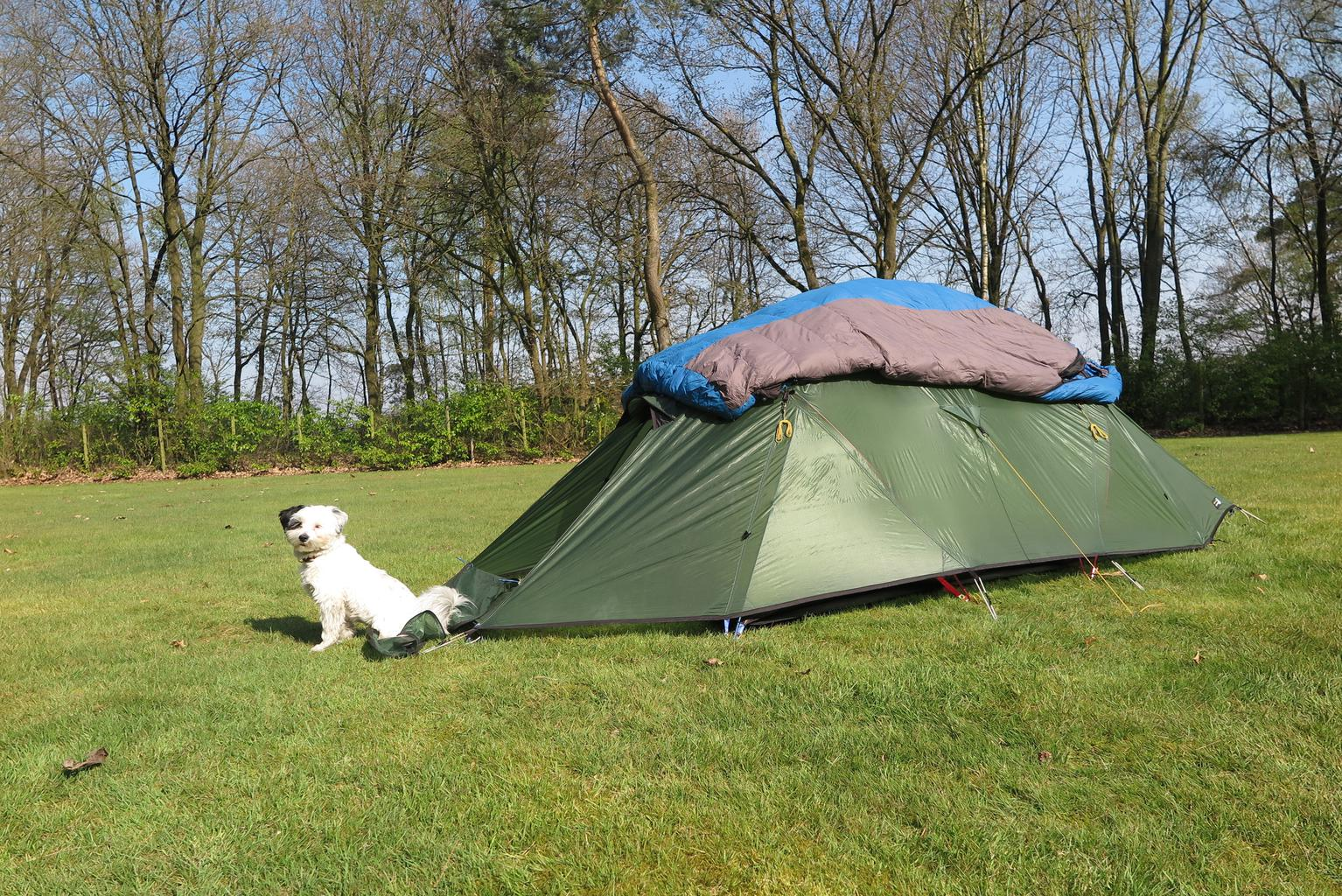 Rocky enjoying a camping trip. Tags: camping dog tent