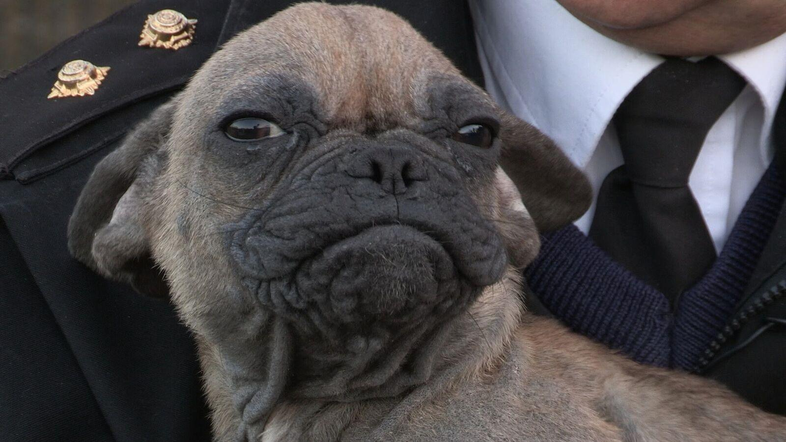 2 Ugly Alien French Bulldog Pups Rescued By The Rspca Enjoy A