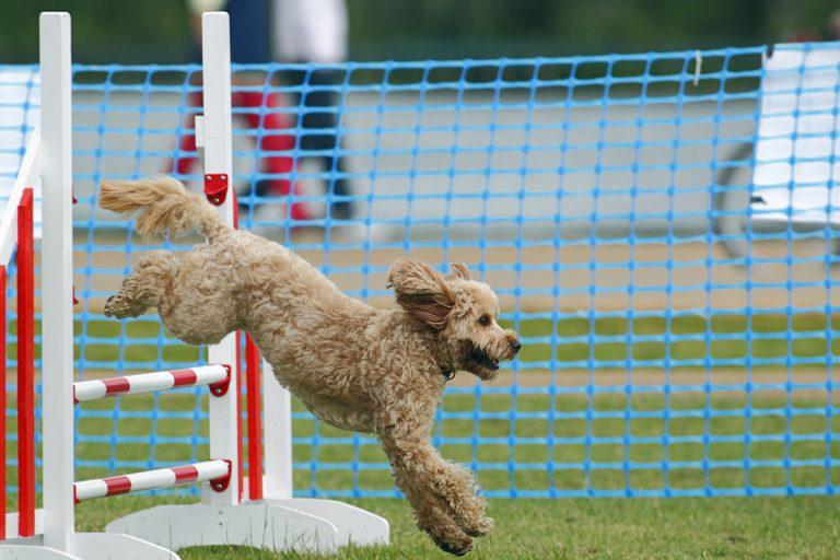 Paws at the ready as The Mayhew Animal Home is set to hold one of the best dog shows of the summer on Sunday July 16th. Tags: Hounds on the Heath rescue dog The Mayhew Animal Home