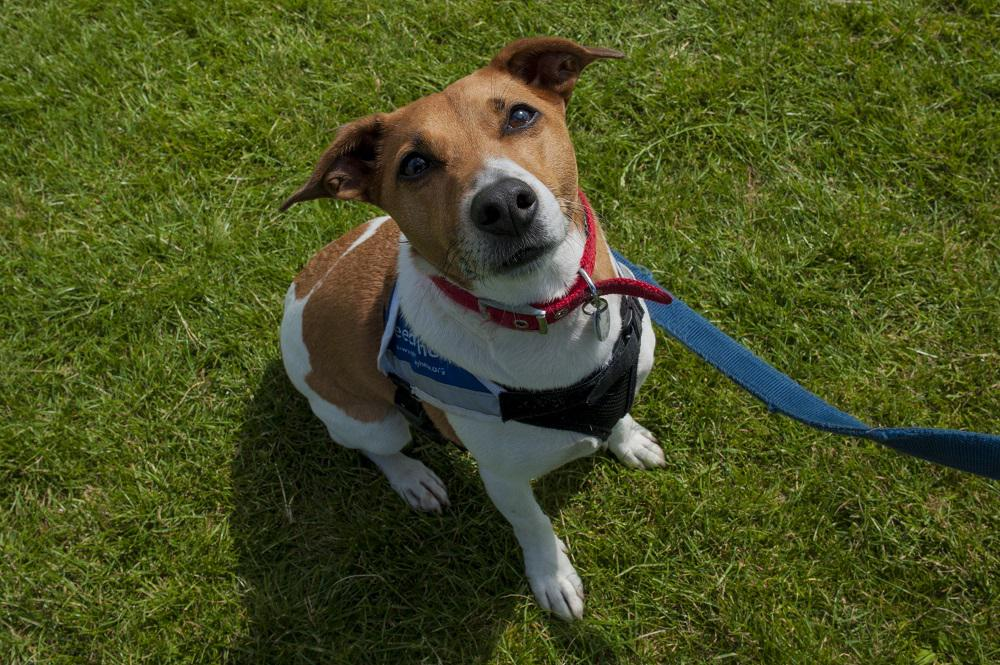 Photo Credit (Bonnie Baker) Hounds on the Heath. Tags: Hounds on the Heath rescue dog The Mayhew Animal Home
