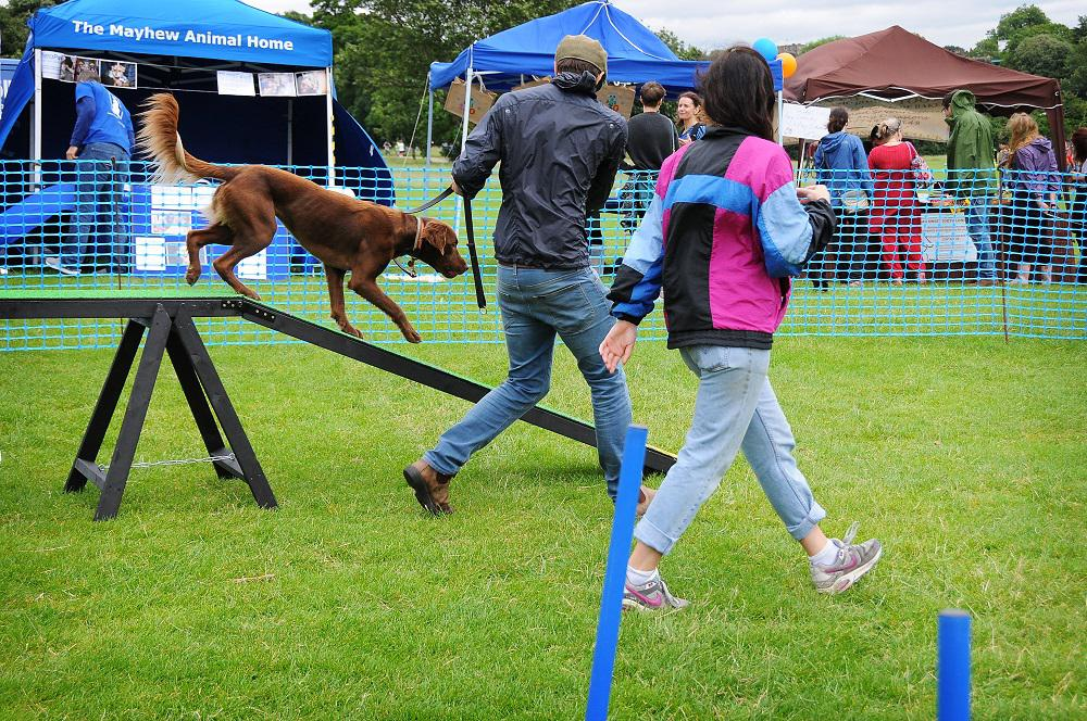 Photo Credit (Jo Moolenschot) Hounds on the Heath. Tags: Hounds on the Heath rescue dog The Mayhew Animal Home