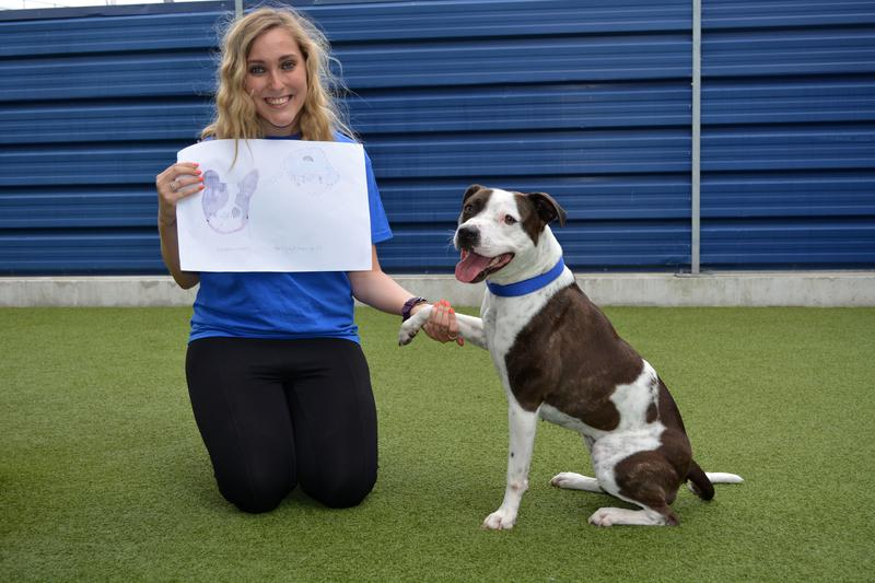 One-year-old Staffie Indie was a much-loved pet, but sadly her owners' circumstances changed and they were no longer able to look after her. Tags: Battersea Dogs & Cats Home charity rescue dog