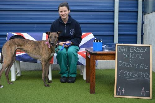 Couscous the Greyhound is ready for school. Tags: back to school Battersea Dogs & Cats Home charity Greyhound rescue dog