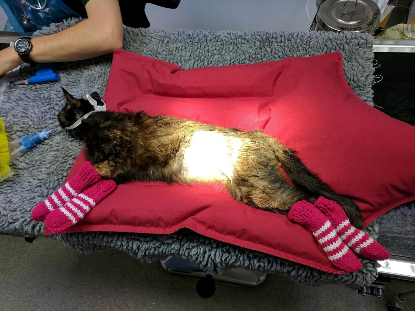 The RSPCA is calling on knitters to put their skills to use this Wool Week by whipping up leg warmers for sick kittens, snuggly nests for baby hedgehogs and jumpers for chilly dogs. Tags: cat knitted RSPCA