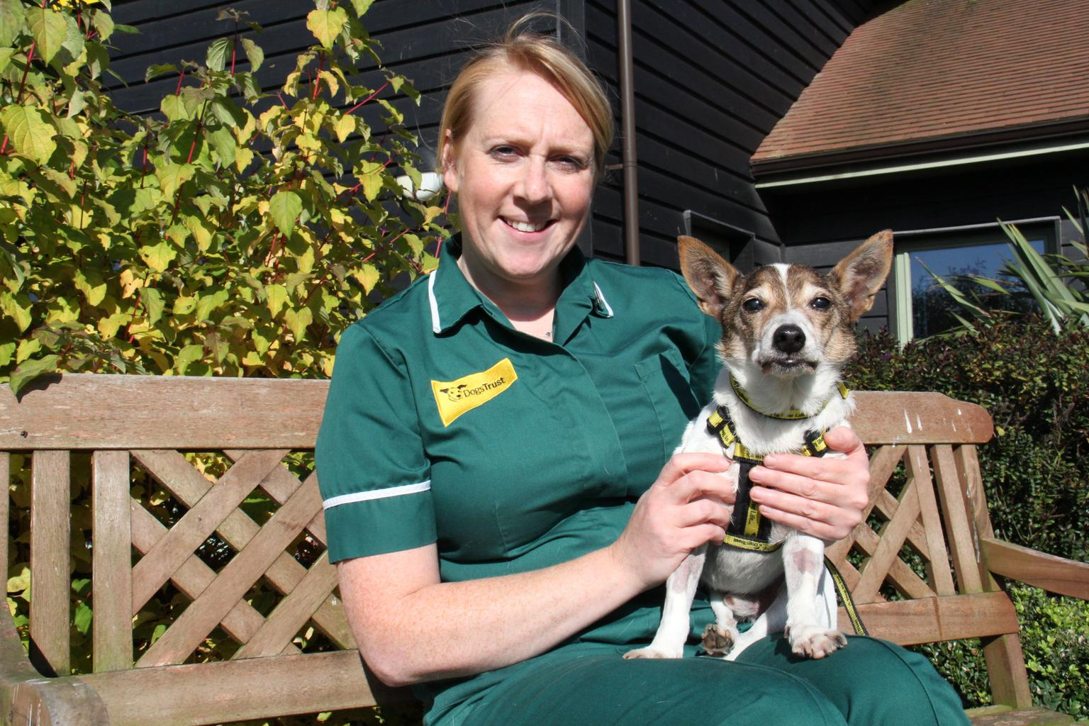 Dogs Trust veterinary nurse, Sue Thomas, is foestering Bobby while he waits for his forever home. Tags: Dogs Trust Jack  Russell Terrier oldest dog rescue dog