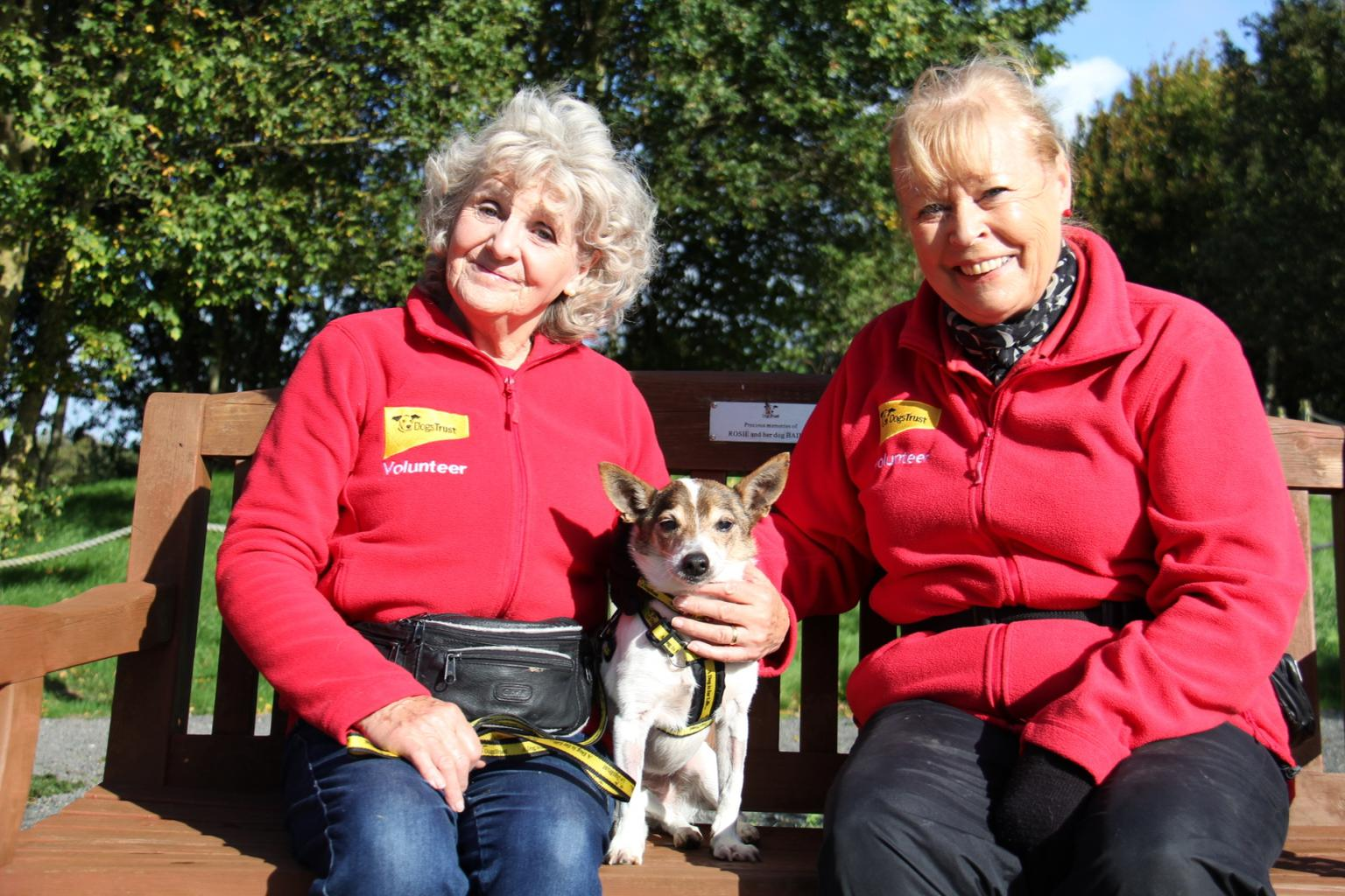 Bobby enjoys getting out and about with volunteers Audrey Welson and Avril Randal. Tags: Dogs Trust Jack  Russell Terrier oldest dog rescue dog