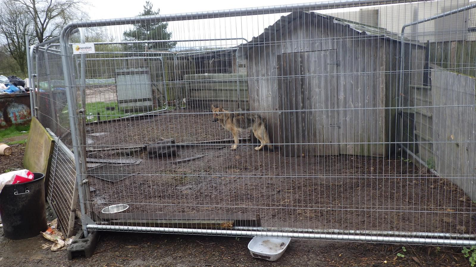 """All the dogs were being kept in filthy, damp conditions - some in makeshift, muddy outside runs and others in cold, concrete pens inside outbuildings."