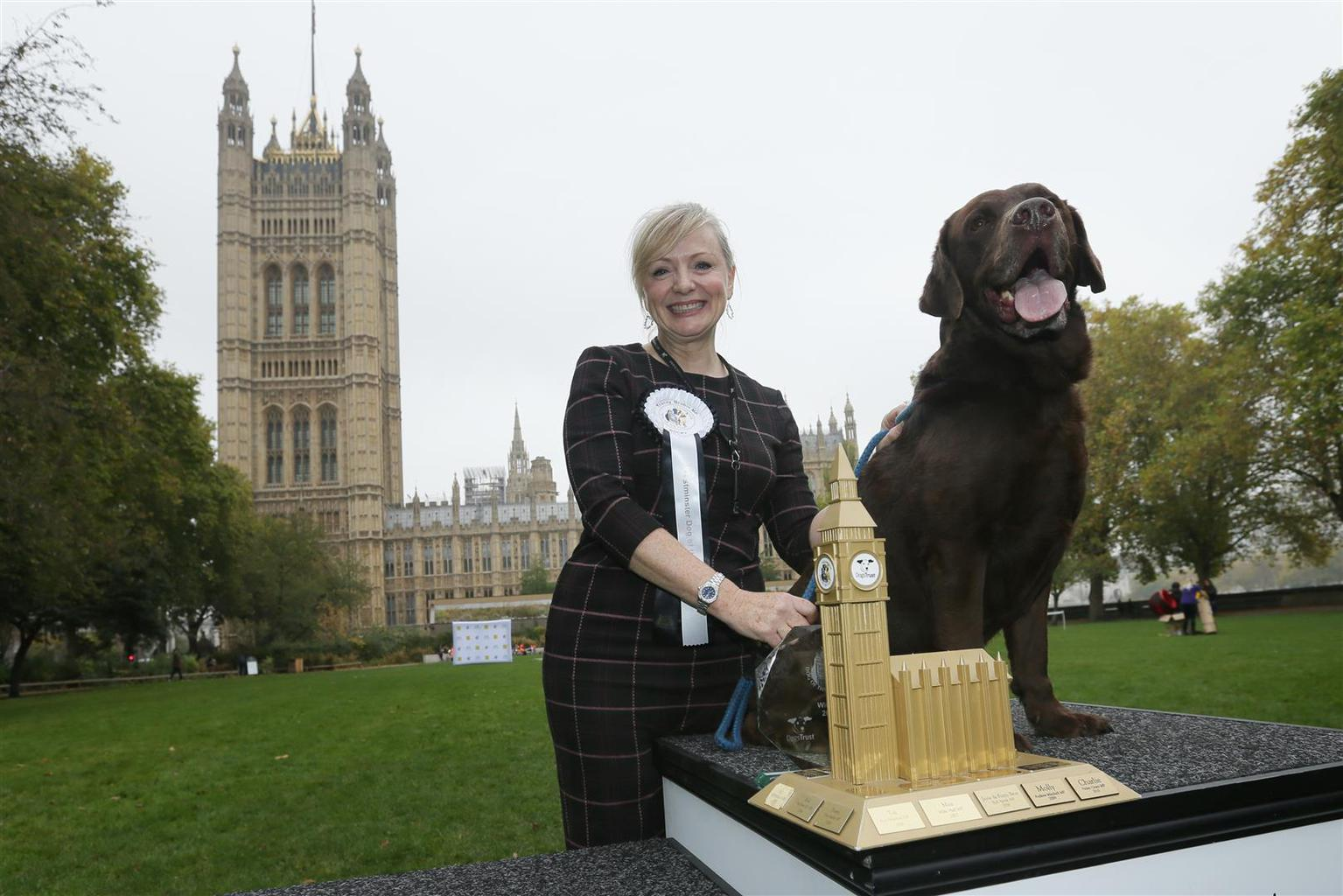 There was a worthy winner in Westminster today, as Rocky, a seven-year-old Labrador belonging to Batley and Spen Labour MP Tracy Brabin, was crowned 2017 Westminster Dog of the Year. Tags: dog labrador Labrador Retriever westminster Westminster Dog of the Year