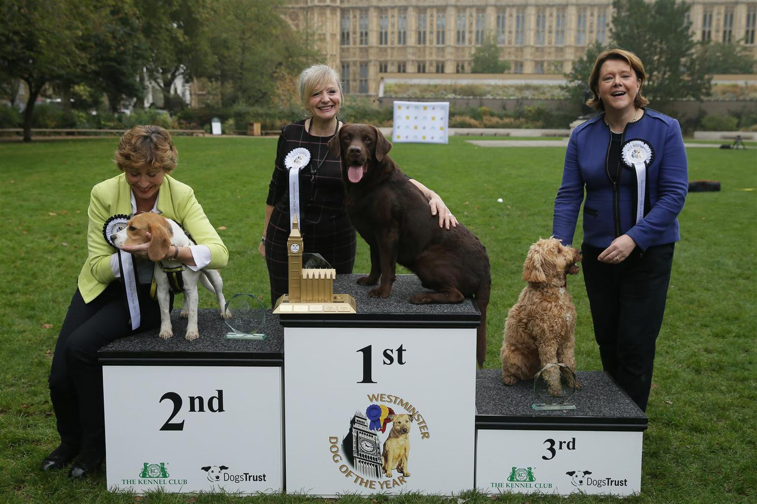 There was a worthy winner in Westminster today, as Rocky, a seven-year-old Labrador belonging to Batley and Spen Labour MP Tracy Brabin, was crowned 2017 Westminster Dog of the Year. Leading the opposition in second place was Bonnie, a Beagel owned by Rebecca Pow MP for Taunton Deane, with a place in the trophy cabinet awarded to Ted, a Cockapoo owned by Maria Miller MP for Basingstoke in third. Tags: Beagle cckapoo dog Labrador Retriever Westminster Dog of the Year Finalists