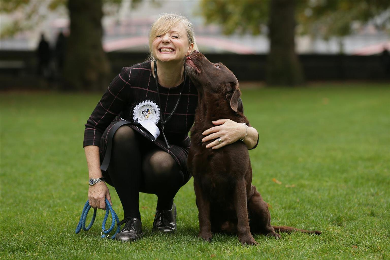 There was a worthy winner in Westminster today, as Rocky, a seven-year-old Labrador belonging to Batley and Spen Labour MP Tracy Brabin, was crowned 2017 Westminster Dog of the Year. Tags: dog Labrador Retriever Westminster Dog of the Year