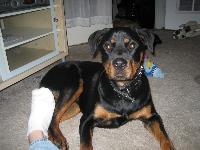 Dogs name: SiccariOwners Name: Ariel N. /Kirk H.