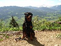 Dogs name: Ares von der Edelsee´r RanchOwners Name: Gruber Verena