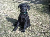 Dogs name: JackieOwners Name: DJC3 1/2 months