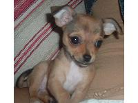 Dogs name: BellaOwners Name: Ashley Peters