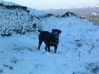 Dogs name: KaneOwners Name: PhilHere is my boy enjoying the snow!!