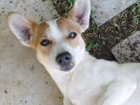 Dogs name: BrakkenjanOwners Name: Bernard Roetz