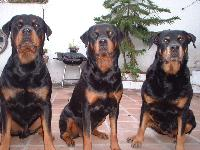 Dogs name: my kidsOwners Name: rene torashthe greatest dog-breed in the whole world