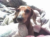 Dogs name: BEBEOwners Name: JOE & MELISSA COUTUREALMOST 10 YEARS OLD IN AUGUST AND SHE STILL IS A LITTLE HOTTIE DOG