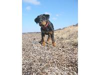 Dogs name: Enya   4 monthOwners Name: A. Bejerholm