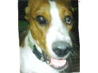 Dogs name: Ceaser!Owners Name: ChrissyThis is Ceaser he is real active and loves to be with people!!