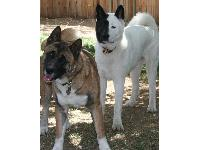 Dogs name: Kianti and JavaOwners Name: Rhonda and Glenn H.