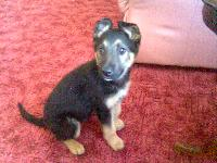 Dogs name: Zeus GeorgeOwners Name: Karenhe is very intelligent and welcoming and playful xx