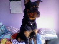 Dogs name: TobyOwners Name: Louise Ridgwellhe's soo cute!