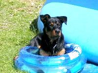 Dogs name: TobyOwners Name: Elaine Ridgwellmy little water baby.