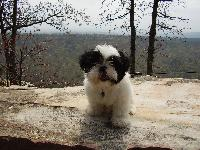 Dogs name: GizmoOwners Name: LisaThis is my baby, Gizmo. He is the greatest dog I have ever owned. He loves to hike and kayak with me and he has the best temperment of any dog I have been around.