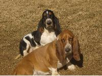 Dogs name: Our Lily and DixieOwners Name: Life is wonderful!