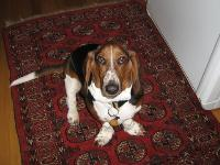 Dogs name: GordyOwners Name: Sara